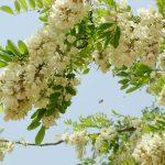 Tìm hiểu về trà thảo mộc Tam Đảo
