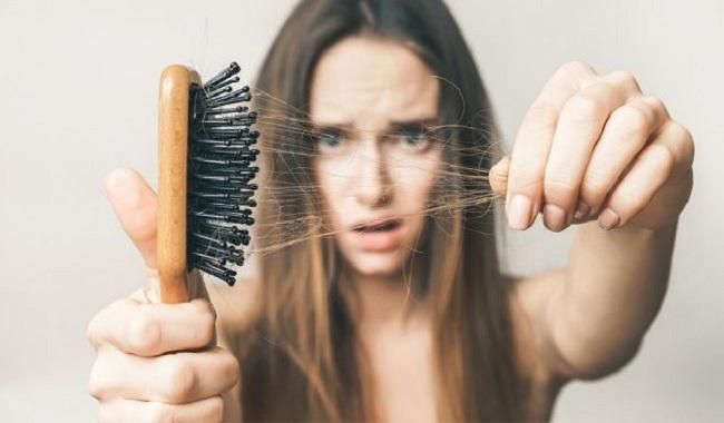 Hà thủ ô Tam Đảo giúp đen tóc, kích thích mọc tóc