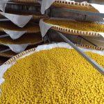 Mua bán tinh bột nghệ tại Tuyên Quang giá rẻ