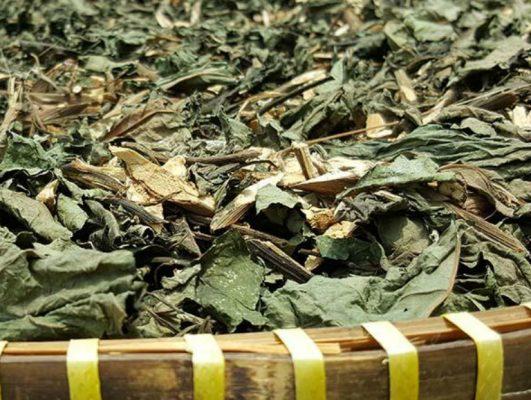thân láy của cây hà thủ ô phơi khô